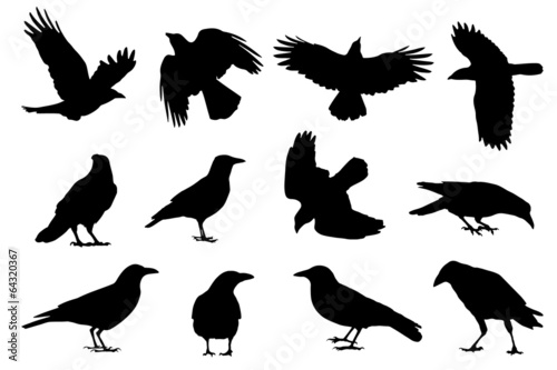 Canvas Print crow silhouettes