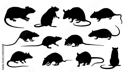rat silhouettes Canvas