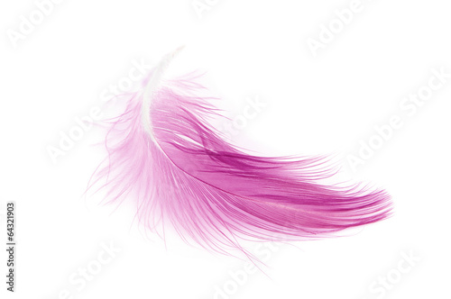 Pink feather on white background