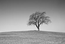 Single Black And White Tree
