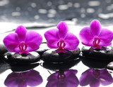Fototapeta Kitchen - Three orchid flower and stones with reflection in water drops
