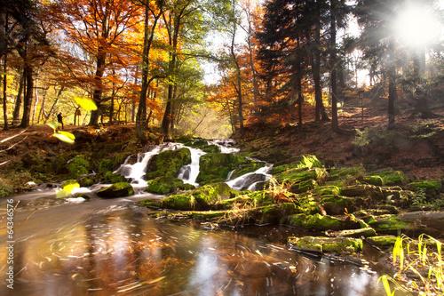 Sonnenlicht im Herbstwald