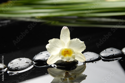 Poster Spa Still life with white orchid and green leaf and zen stones