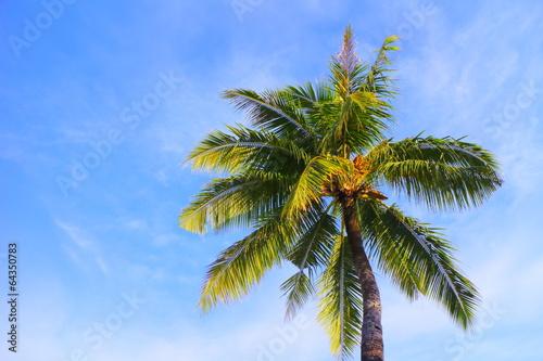 Papiers peints Palmier 青空と椰子の木 Palm trees and blue sky