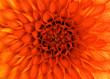 Leinwandbild Motiv closeup flower