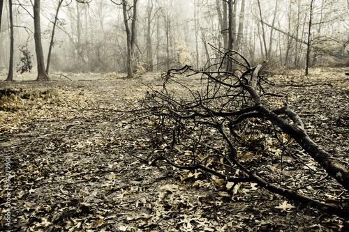 Fotografie, Obraz  Creepy Foggy Woods