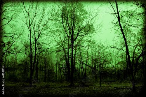 Fotografie, Obraz  Spooky Foggy Woods