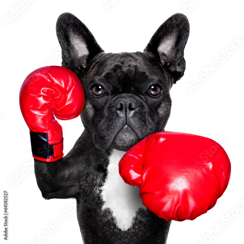 Photo  boxing dog