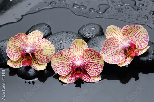 Naklejka na kafelki three orchid and pebbles on wet background