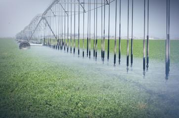 Farm's crop being watered  sprinkler irrigation system
