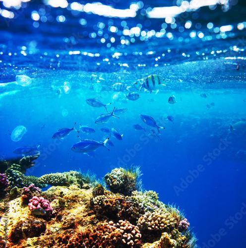 Papiers peints Sous-marin Fish underwater