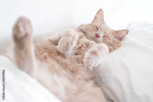 Fototapeta Cat in Deep sleep