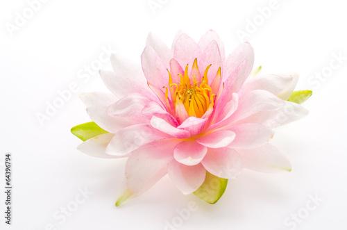 Plakat Lotosowego kwiatu odosobniony biały tło