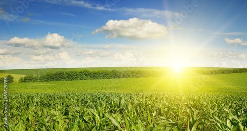Fotobehang Cultuur Beautiful sunset on corn field