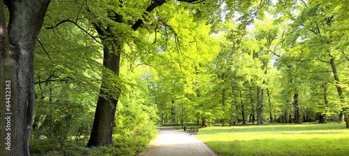 Fototapeten Wald Lush forest