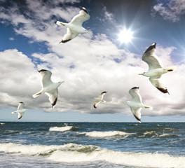 FototapetaFreiheit: Möwen am Meer :)