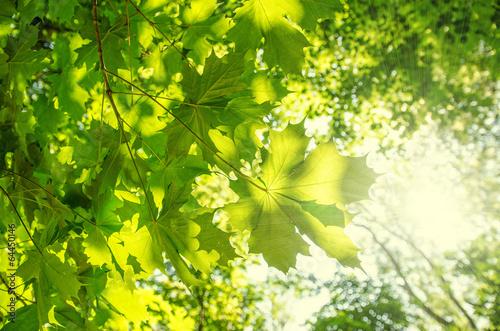 Wald-Motive jeden Tag