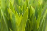Im Frühlingsgrün