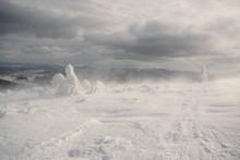 Snowstorm. Carpathian, Ukraine.