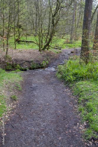 Foto op Canvas Weg in bos Woodland path