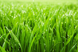 Mit natürlichen Grün durchwirkt