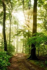 Fototapeta Morgensonne leuchtet in den nebeligen Wald
