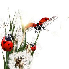 Naklejka Eko Background with vector green grass, dandelions and ladybirds