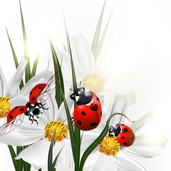Panel Szklany Eko Background with vector scenery cosmos flowers and red ladybirds