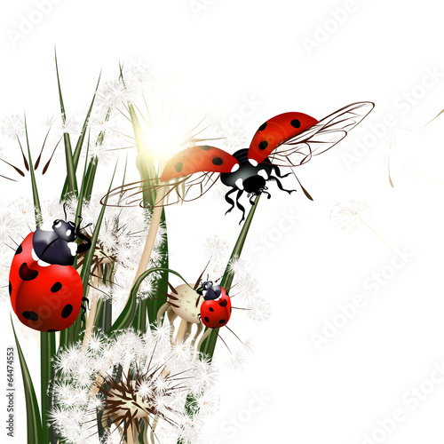 Piękne obrazy tlo-z-wektorowa-zielona-trawa-dandelions-i-ladybirds
