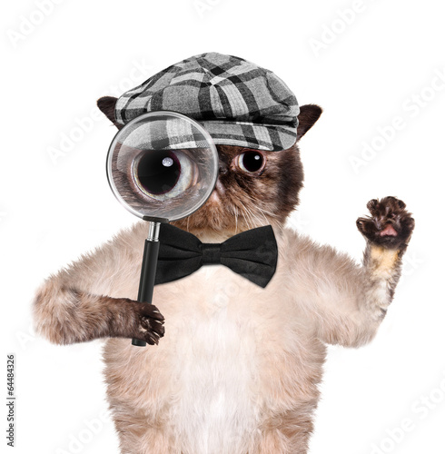 Canvas Print Cat with magnifying glass and searching