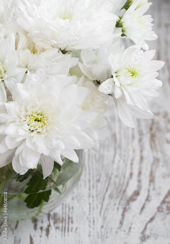 White Chrysanthemum #64508158