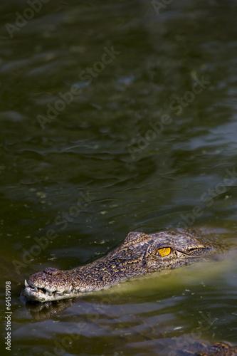Foto op Plexiglas Krokodil Gefährliches Krokodil