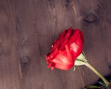 Two Red Roses On Old Wood, Old Style, Valentine Day And Love