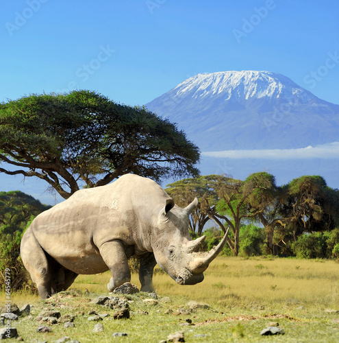 Spoed Foto op Canvas Neushoorn Rhino in front of Kilimanjaro mountain