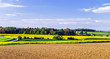 canvas print picture - Colorful rural landscape with yellow bittercress fields