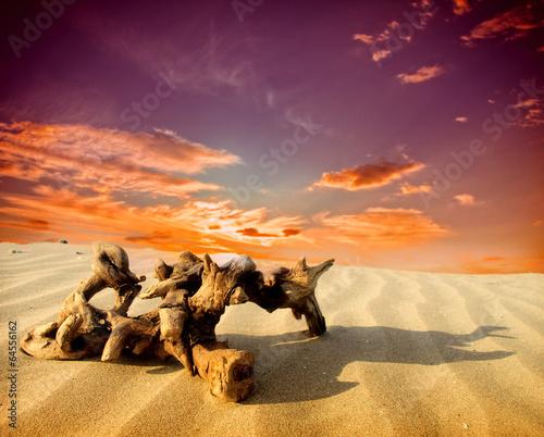 Foto op Plexiglas Crimson Sand dunes at sunset in the Sahara Desert