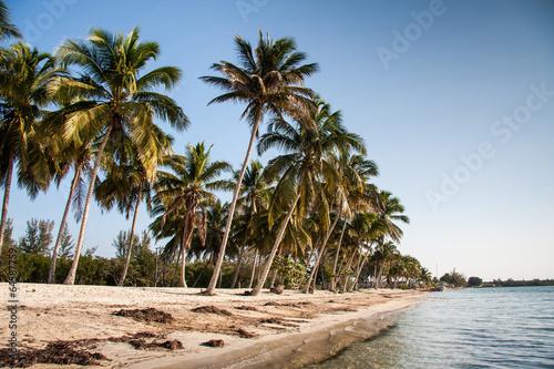 Playa Larga beach, Bay of Pigs,  Cuba,  America Canvas Print