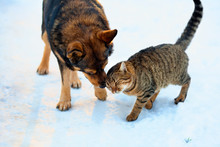 Cat And Big Dog Playing In The Snow