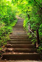Obraz na Szkle Stairway to forest