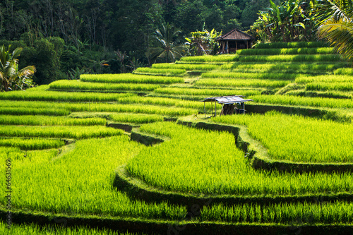 Photo sur Toile Bali Rice terraces of Bali Island,Jatiluwih, Ubud
