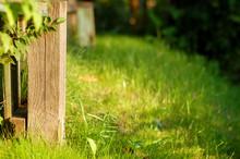 Old Fence Sunlit