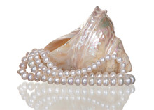 Pearl Necklace In A Seashell O...