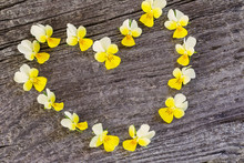 Yellow Flowers In Form Heart  On Wooden Background