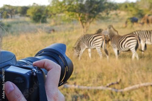 Photo sur Toile Afrique du Sud Photographing wildlife, South Africa
