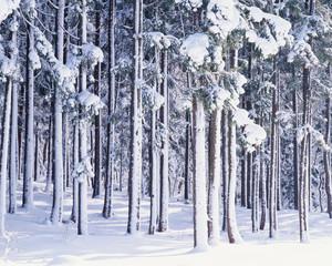 Fototapeta Inspiracje na zimę 마운틴 파노라마