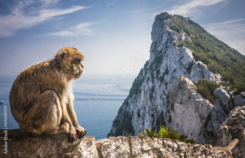 Photo sur Toile Singe Monkey in Gibraltar