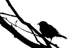 Silhouette D'un Oiseau Sur Une...