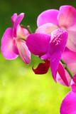 Orchidea w makro