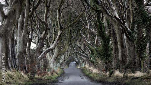Keuken foto achterwand Noord Europa Dark Hedges - Ireland