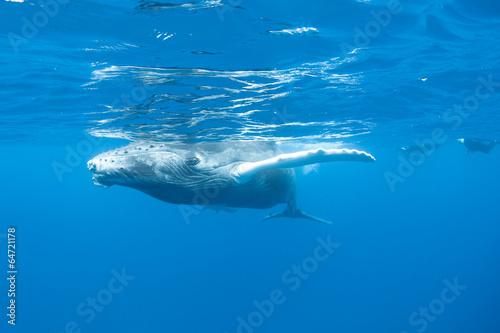 In de dag Dolfijn Humpback Whale 2